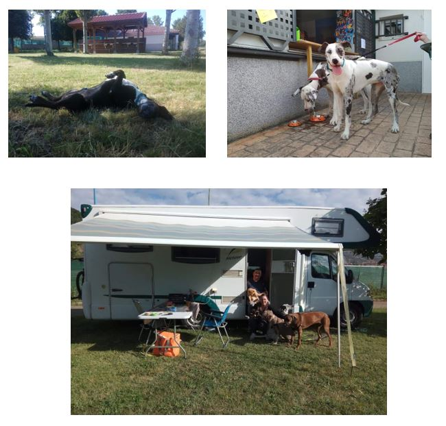 amigos de los perros en el camping de león